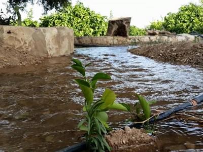 Jericho Water Supply Ein Dyook Auberg-Inn