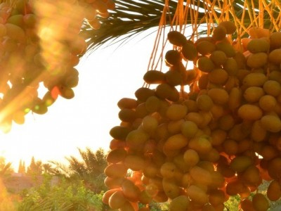 Morning in Jericho Palestine at Auberg-Inn by Laura Kar
