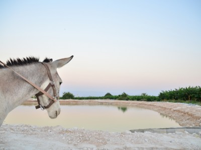Jericho donkey Palestine amanda Palestine tour