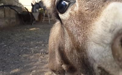 Baby Donkey Rasputin in Jericho